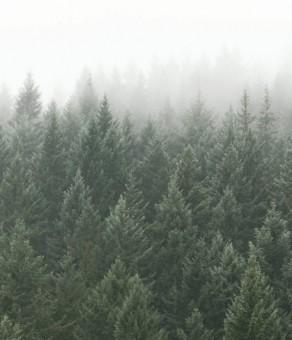crisp-pines-forest-plain-820x532