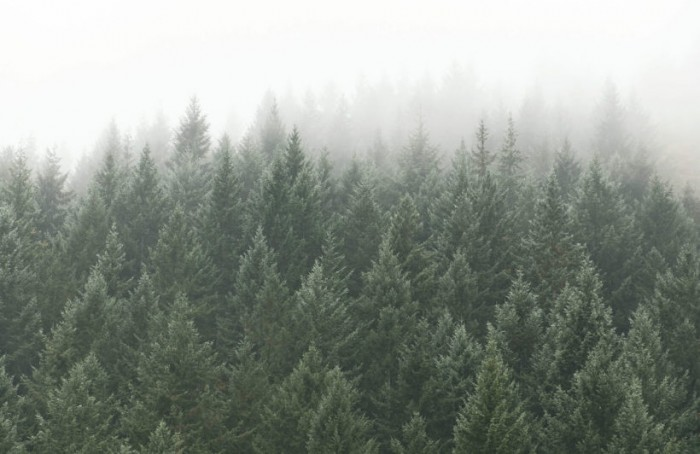 crisp-pines-forest-plain-820x532